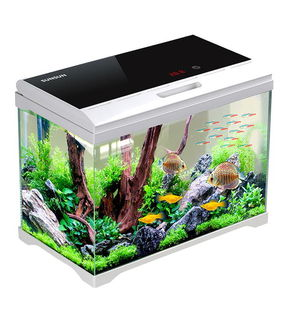 30L High Quality aquarium with filter, light and built in thermometer